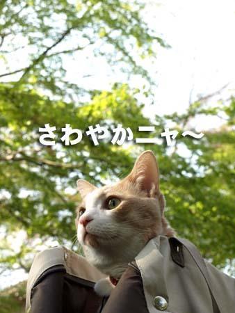 04 美人 さわやかニャ〜.jpg