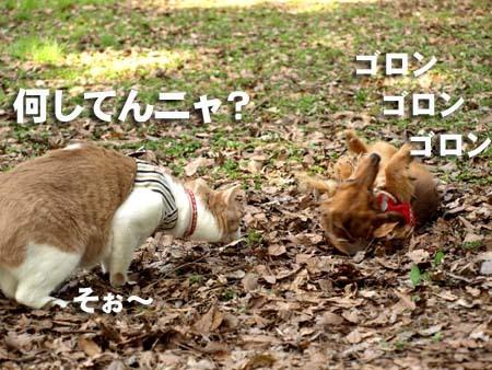 04 美人 何してんニャ?.jpg