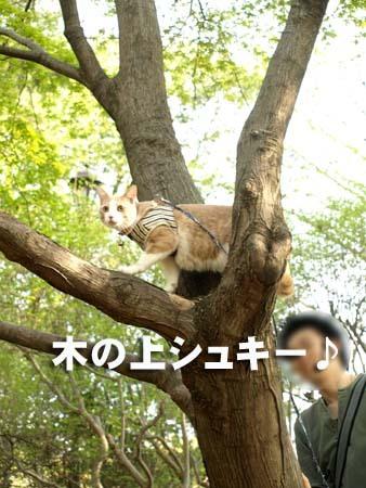04 美人 木の上シュキー♪.jpg