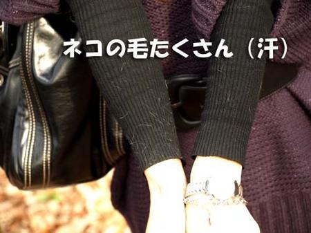 10美人になる方法 ネコの毛たくさん(汗).jpg