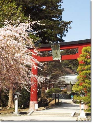 10美人になる方法 鳥居と桜.jpg
