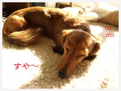 11すや〜ゴロゴロ.jpg