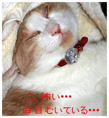 11白目ニャンコ.jpg