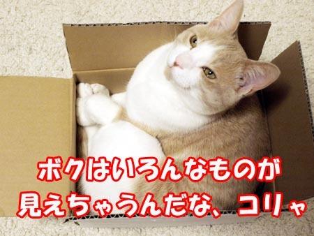 11 いろんなものが見えちゃうマイケル.jpg