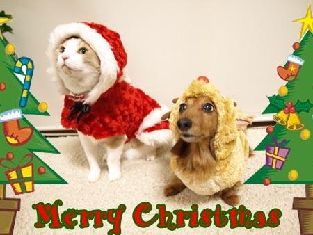 1 メリークリスマス.jpg