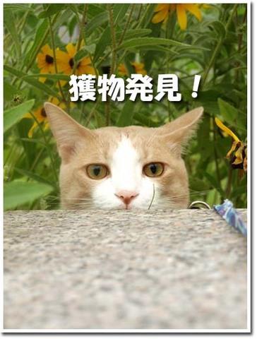 13美人になる方法 獲物発見!.jpg