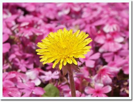 14美人になる方法 春の花.jpg