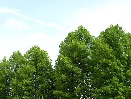16 美人 空と木.jpg