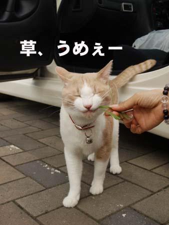 16 美人 草、うめぇー.jpg