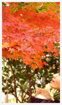 16紅葉とネコと私.jpg