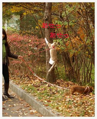 16木登りニャンコ.jpg