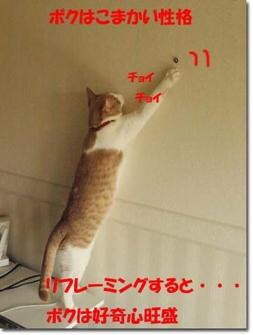 17美人になる方法 ネコのリフレーミング.jpg