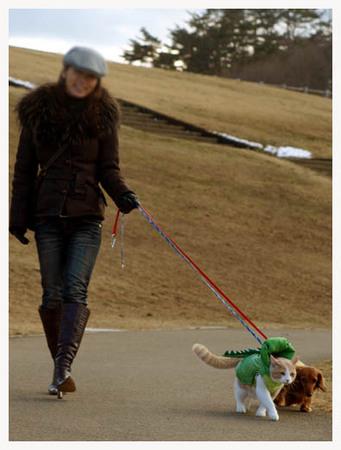 18美人になる方法 仲良く散歩.JPG