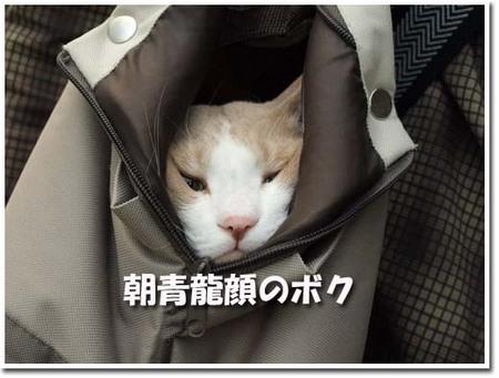 19美人になる方法 朝青龍顔のボク.jpg