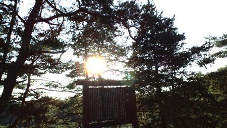 19 松からの木漏れ日.jpg
