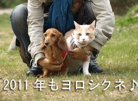 1 2011年もよろしくねのコピー.jpg