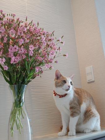1 お花.JPG