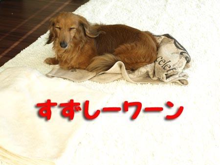 1 すずしーワーン.jpg
