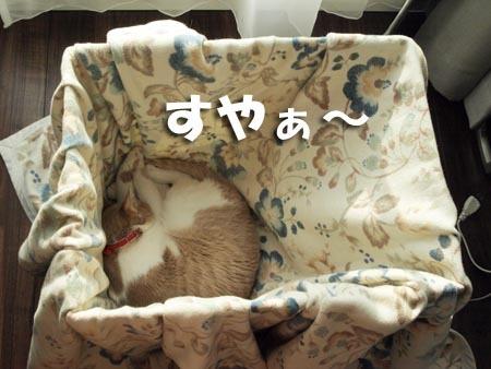 1 すやぁ〜.JPG
