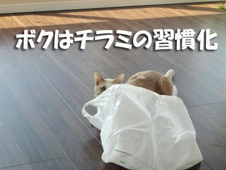 1 ちらみの習慣化.jpg
