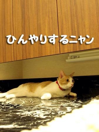 1 ひんやりするニャン.jpg