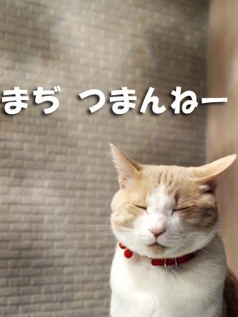 1 まぢつまんねー.jpg