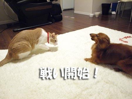 1 戦い開始!.jpg