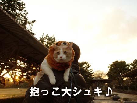 1 抱っこ大シュキ♪.jpg