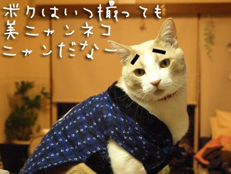1 美ニャンネコ.jpg