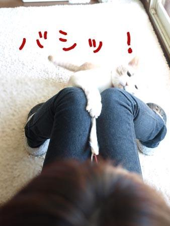1マイケルバシッ.JPG