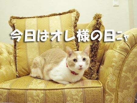 1マイコーの日.jpg