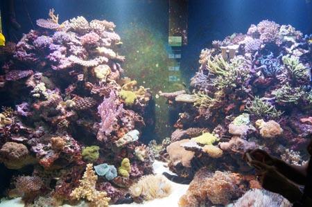 1宮島 サンゴ礁.jpg
