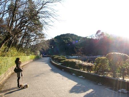 1散歩 太陽取り込む.jpg