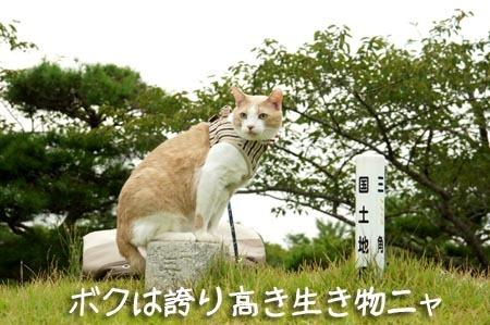 1散歩 誇り高き生き物.jpg