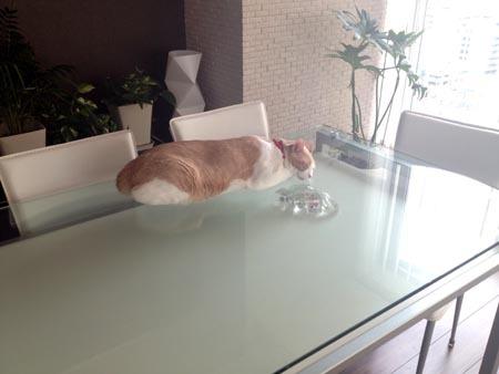 1日常 ダイニングテーブルの上のマイケル.jpg