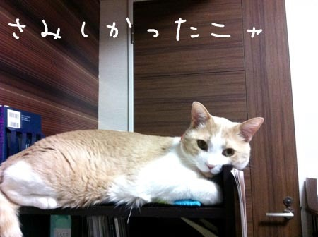 1東京 マイケル .jpg