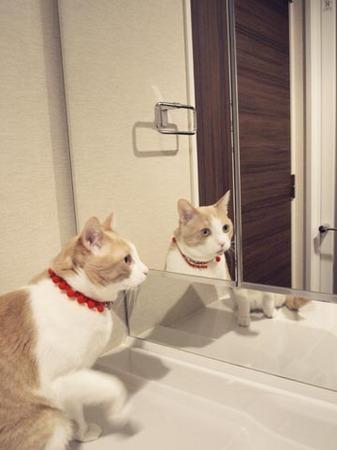 1洗面所が好きなマイケル.jpg