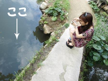 1縮景園 ここ(カメ).jpg