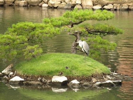 1縮景園 鳥.jpg