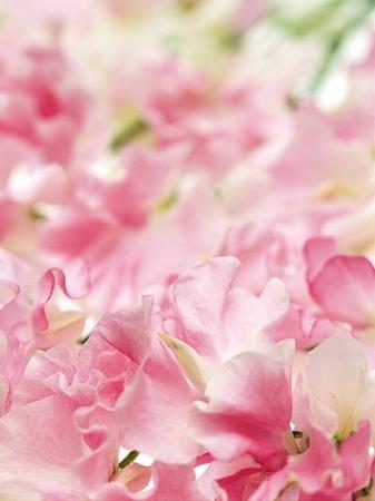 1花.jpg