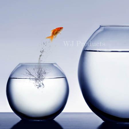 1金魚.jpg