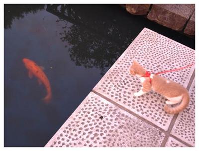 21初めての恋・・いや、鯉.jpg