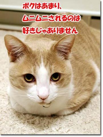 22美人になる方法 じぃ〜.jpg
