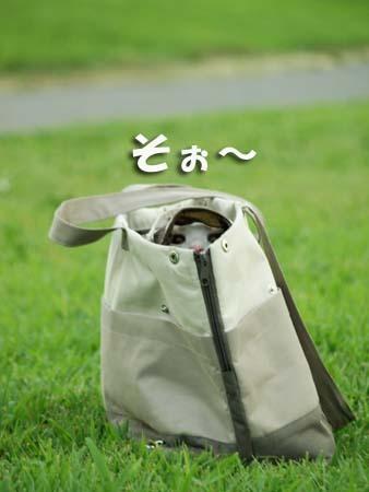 25 美人 そぉ〜.jpg