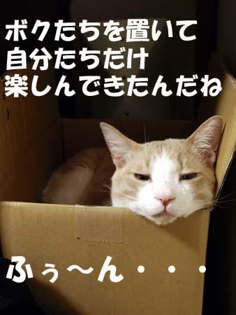 26 美人 ふぅ〜ん・・・.jpg