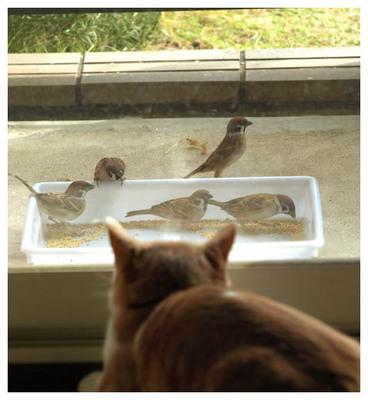 27スズメとネコ.jpg