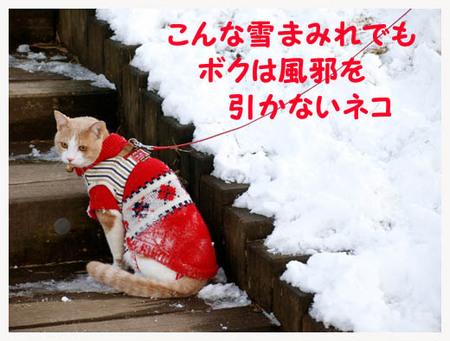 29美人になる方法 風邪を引かないネコ.jpg