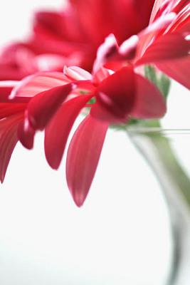 2美しい花.jpg