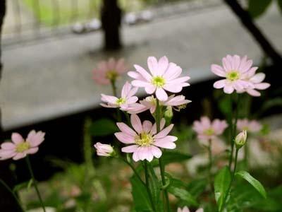 30 美人 庭の花.jpg