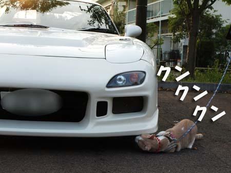31 美人 クンクンクン.jpg
